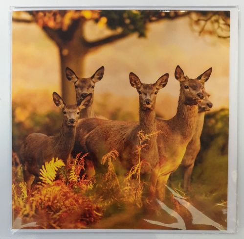 Card - Red deer hinds